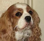elyse-dog